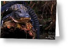 American Alligator On A Cypress Tree Greeting Card
