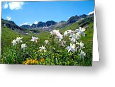 American Basin Columbines Greeting Card