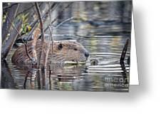 American Beaver Greeting Card
