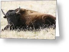 American Bison 2 Greeting Card