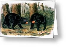 American Black Bear, 1844 Greeting Card