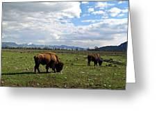 American Buffalo 10 Greeting Card