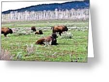 American Buffalo 16 Greeting Card