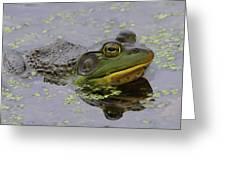 American Bullfrog Greeting Card