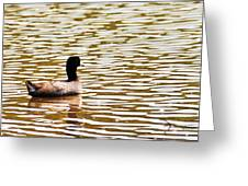 American Coot Floating By Greeting Card