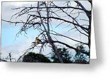 American Goldfinch In Tree Greeting Card