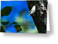 American Goldfinch Leaving Greeting Card
