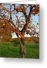 American Persimmon Tree Greeting Card