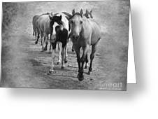 American Quarter Horse Herd In Black And White Greeting Card