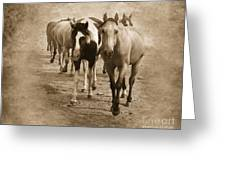 American Quarter Horse Herd In Sepia Greeting Card