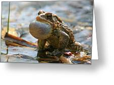 American Toad Croaking Greeting Card