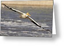 American White Pelican Pelecanus Greeting Card