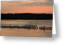 American White Pelicans At Sunset Greeting Card