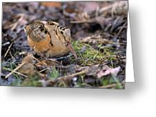American Woodcock Bird Greeting Card
