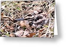 American Woodcock Chick No. 2 Greeting Card