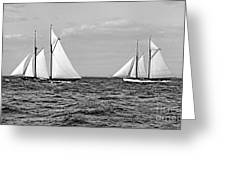 America's Cup Contenders Idler And Hildegarde 1901 Bw Greeting Card by Padre Art