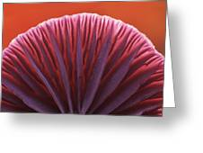 Amethyst Deceiver Laccaria Amethystea Greeting Card
