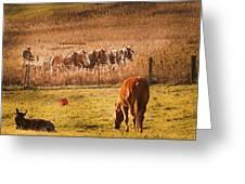 Amish Transportatin All Sizes Greeting Card