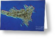 Amoeba Proteus Lm Greeting Card