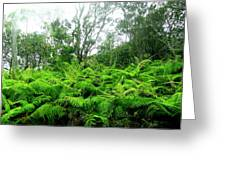 Among The Ferns Greeting Card