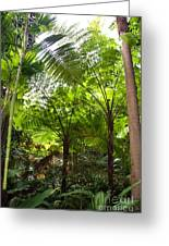 Among The Tree Ferns Greeting Card