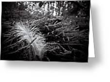 Among Thorns Greeting Card