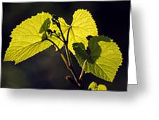 Amur River Grape Leaves (vitis Amurensis) Greeting Card