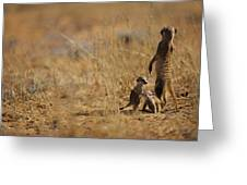 An Adult Meerkat Stands Guard Over Two Greeting Card