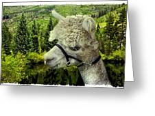 An Alpaca In Vail Greeting Card
