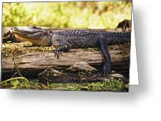 An American Alligator On A Log Greeting Card