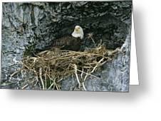 An American Bald Eagle Perches Greeting Card