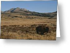 An American Bison Standing Greeting Card
