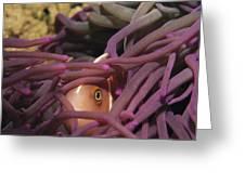 An Anemonefish Peeks Greeting Card
