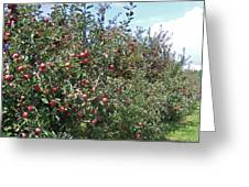 An Apple A Day... Greeting Card