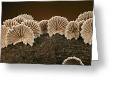 An Array Of Common Split Gill Mushrooms Greeting Card by Darlyne A. Murawski