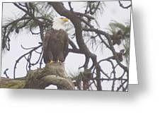 An Eagle Perched  Greeting Card