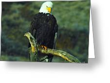 An Eagle Staring Greeting Card