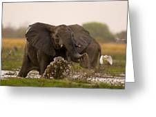An Elephant Charges When Startled Greeting Card