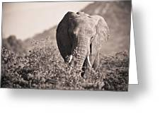 An Elephant Walking In The Bush Samburu Greeting Card