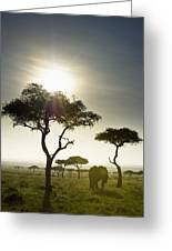 An Elephant Walks Among The Trees Kenya Greeting Card
