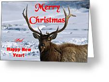 An Elk Christmas Greeting Card