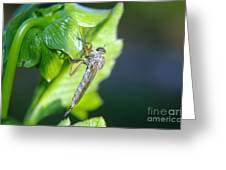 An Insect Resting  Greeting Card