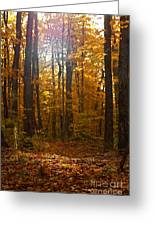 An Inspired Stroll Through The Forest Greeting Card by Inspired Nature Photography Fine Art Photography