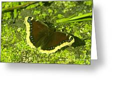 An October Butterfly  Greeting Card