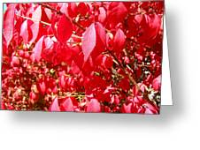 An Ohhh Fall Color Greeting Card