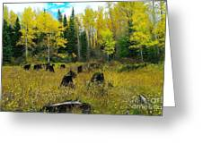 An Old Clear Cut In Autumn  Greeting Card