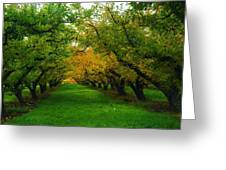 An Orchard Row  Greeting Card