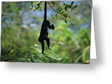 An Unidentified Monkey Hangs Greeting Card