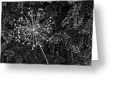 Anatomy Of A Flower Monochrome 2 Greeting Card