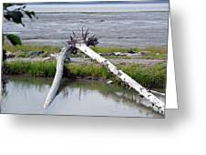 Anchorage In August Greeting Card